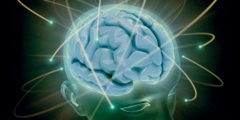 El cerebro es un sistema termodinámico